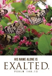 butterflies_13766c