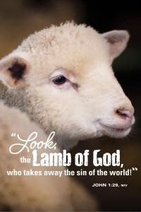 lamb_11138c